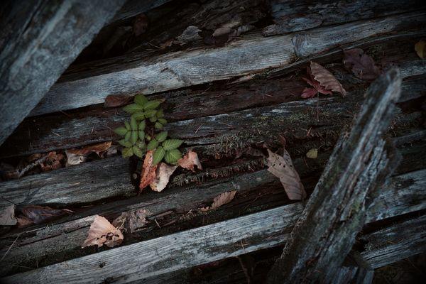 廃材と生命の作例写真