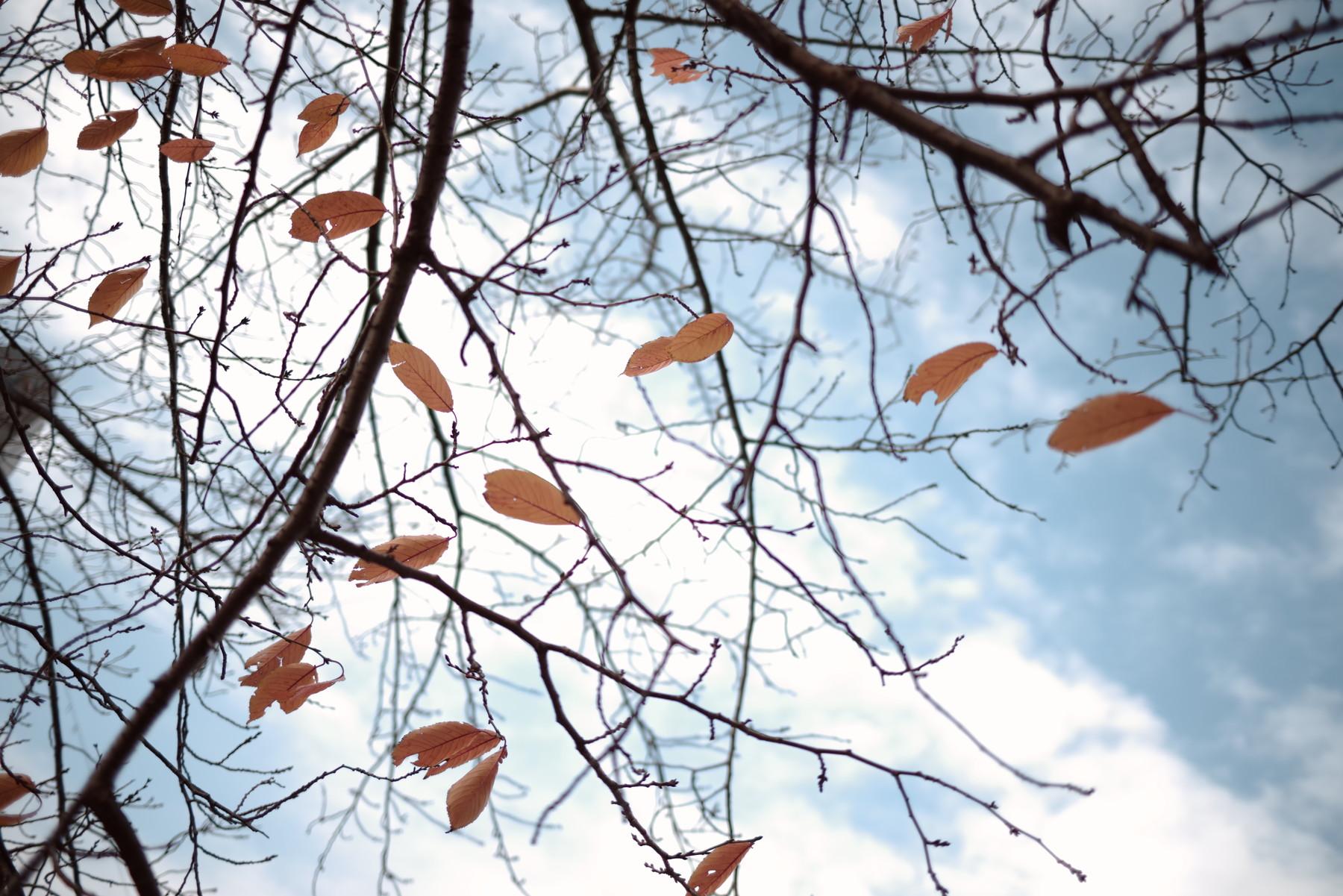 枯れ葉と秋空の作例写真