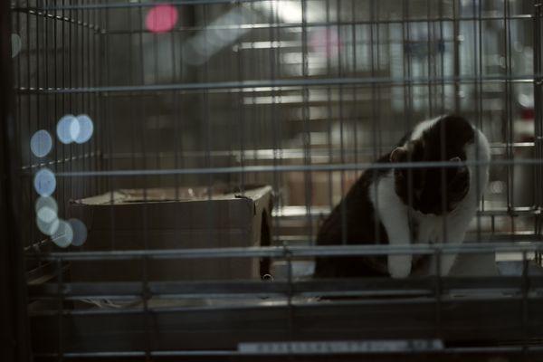 幽閉猫の作例写真