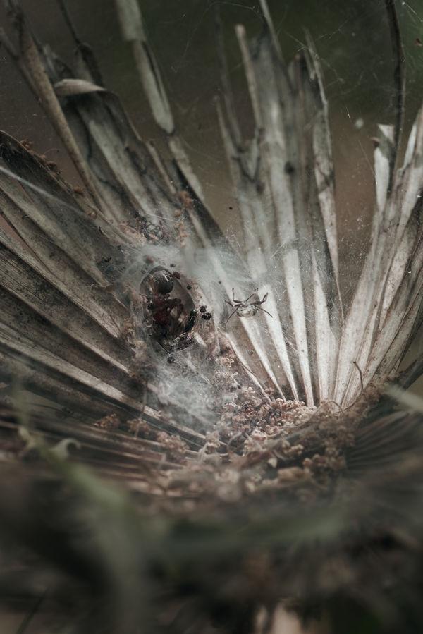 葉上の城の作例写真