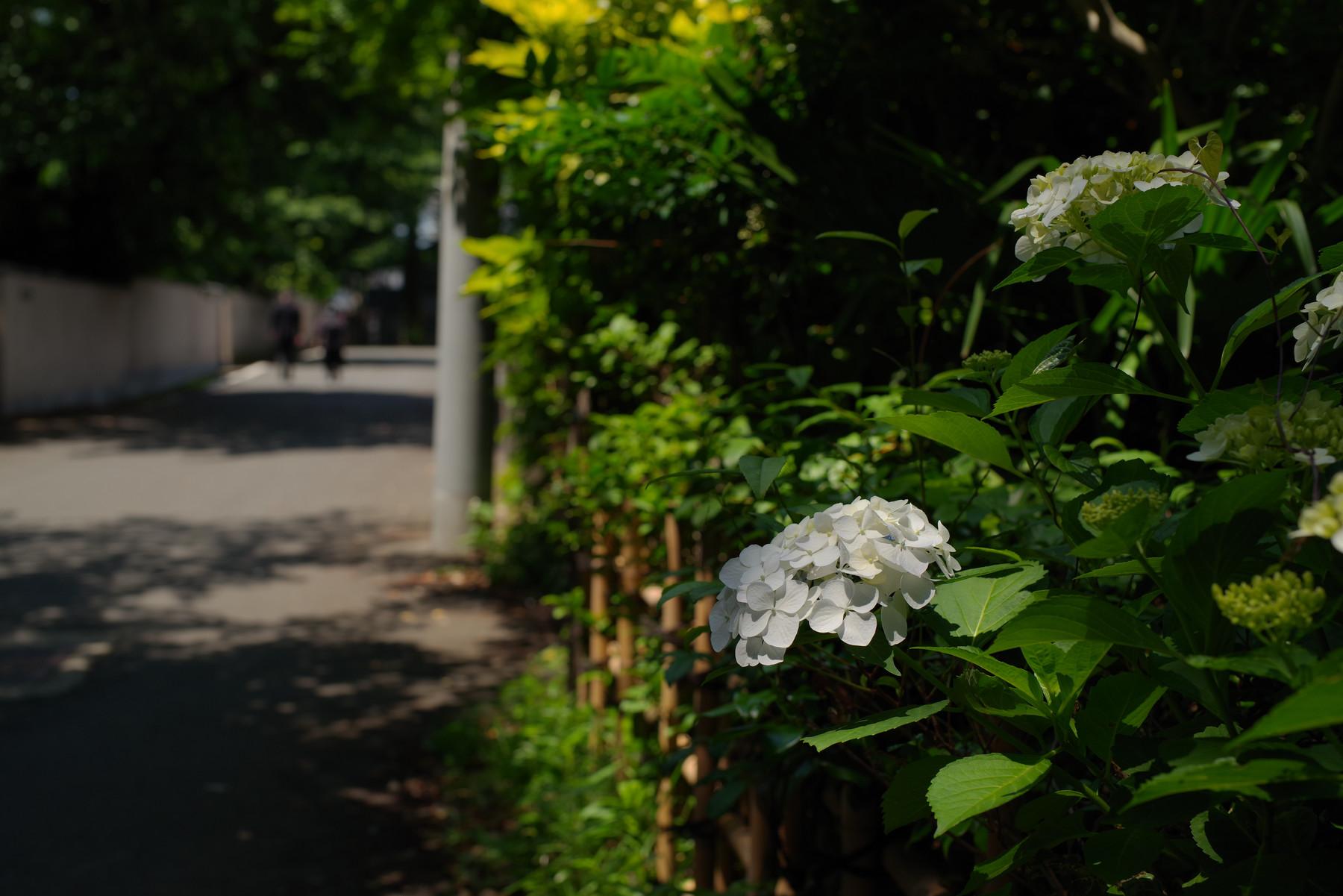 夏の足音の作例写真
