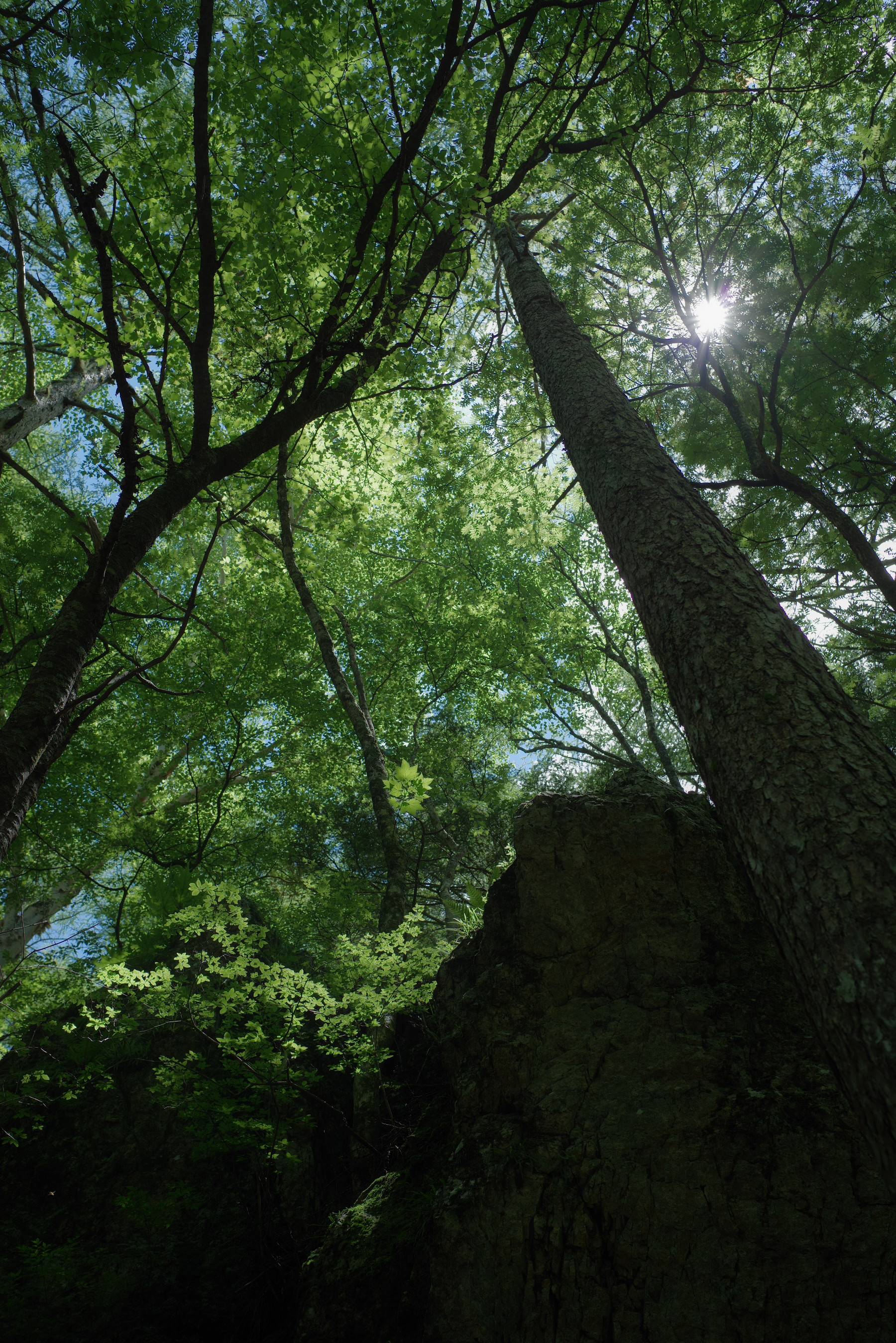 真夏の日差しが彩る森の緑の作例写真