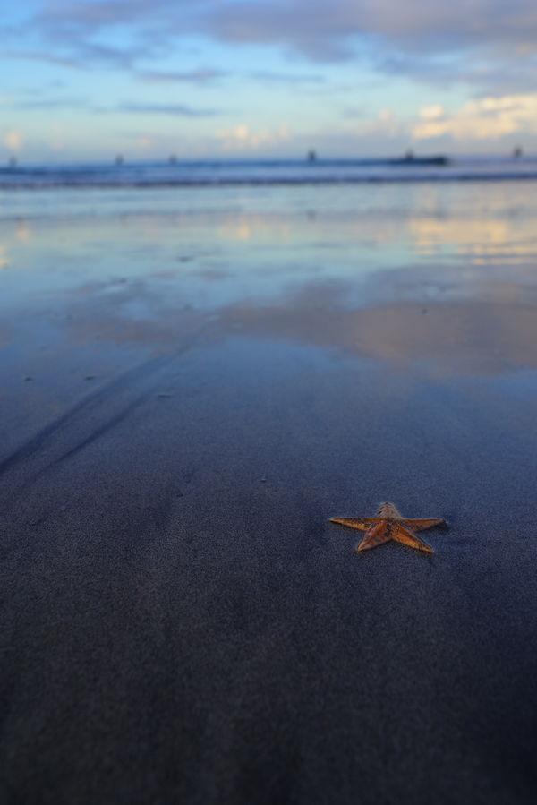 朝焼けを反射する砂浜と打ち上げられたヒトデの作例写真