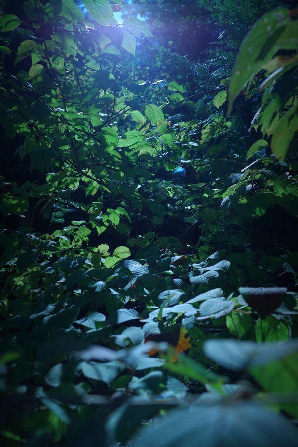 木漏れ日の様子の作例写真