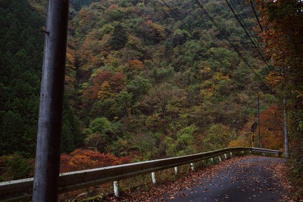 徐々に紅葉をはじめる山中(奥多摩)の作例写真