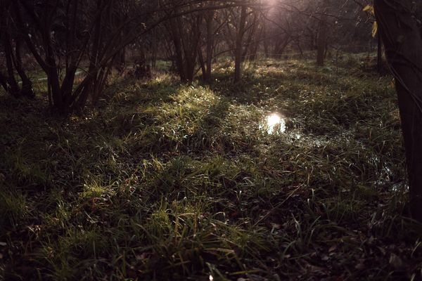 朝日が差し込む湿原の作例写真