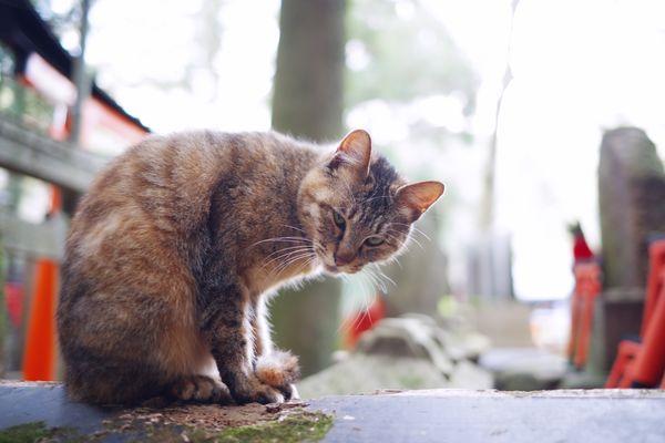 カメラを睨みつける野良猫の作例写真
