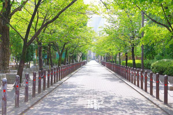 新緑の木々と歩道の作例写真