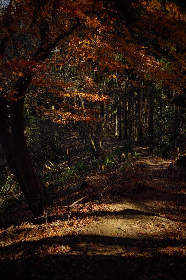 紅葉に彩られる登山道(埼玉県破風山)の作例写真