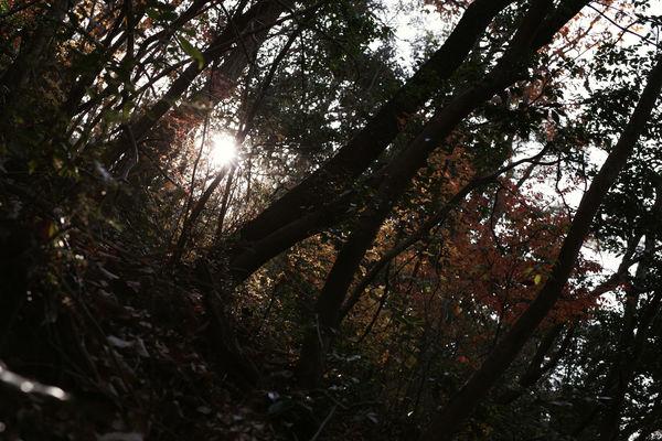 静かに燃える低山の紅葉の作例写真