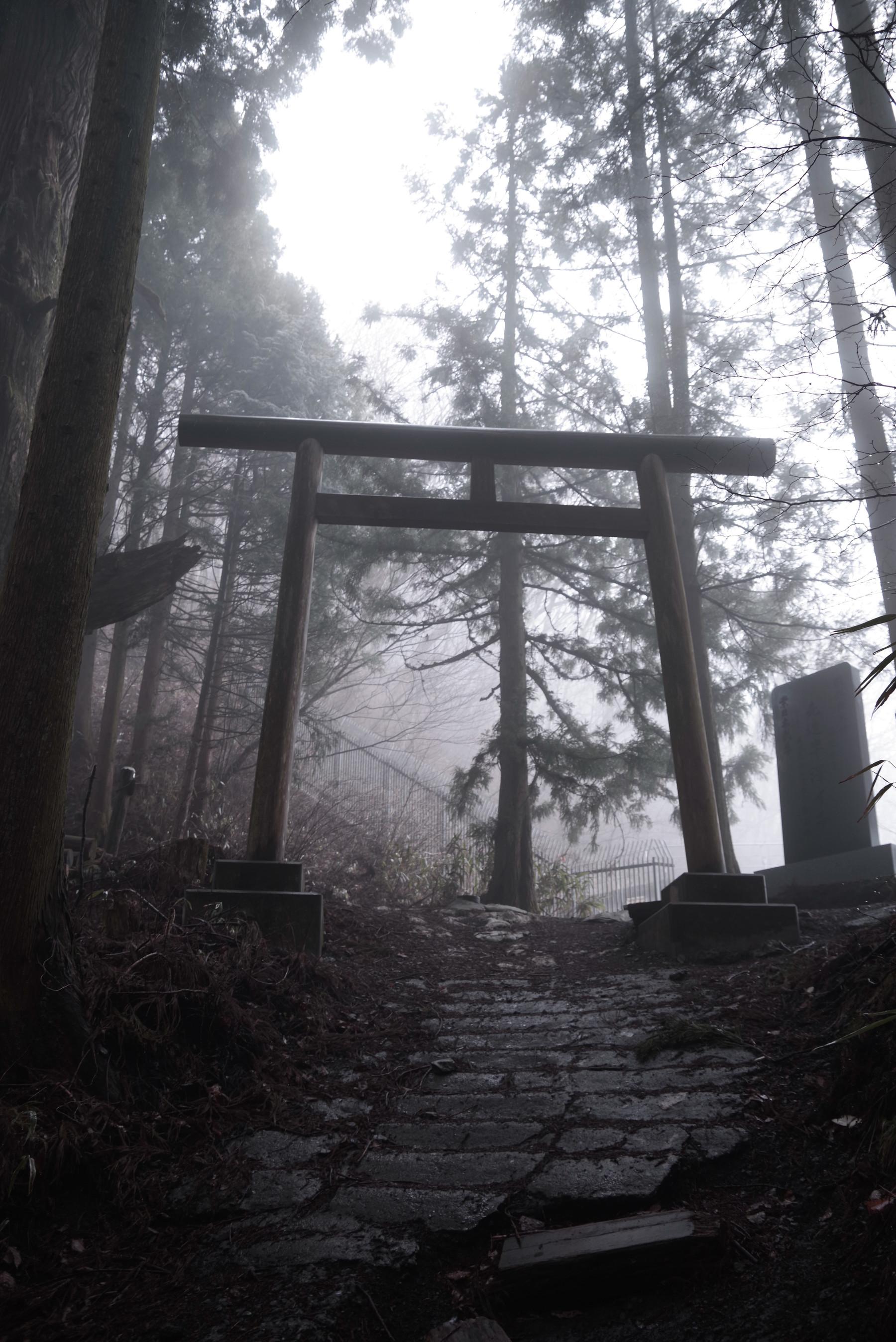 霧の中にたたずむ厳かな鳥居の作例写真