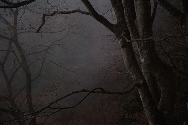 霧煙る奥多摩の森の作例写真