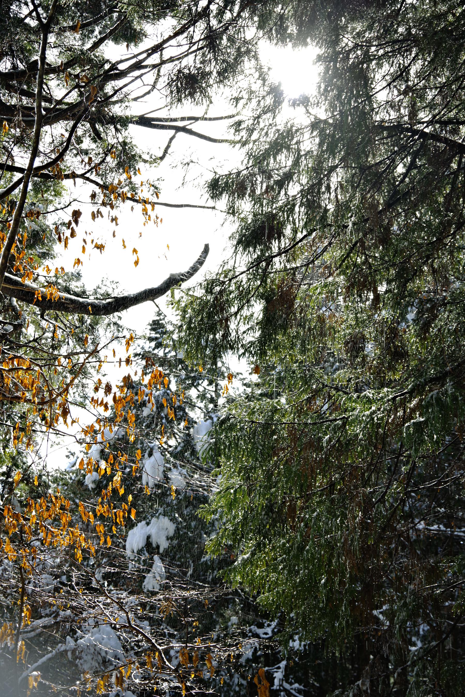 雪と太陽が描く光の乱舞の作例写真