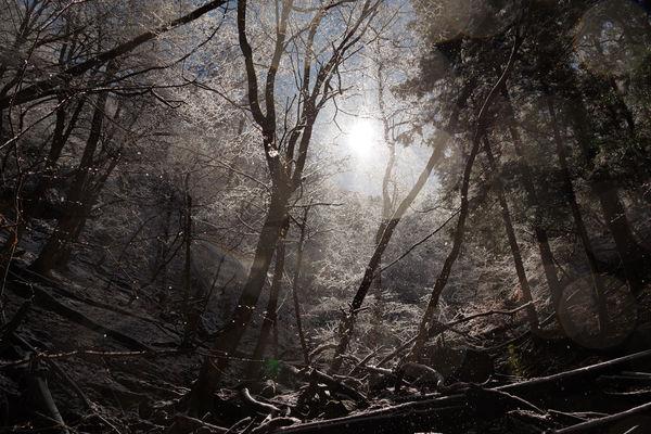 氷が煌めく冬の森(埼玉県横瀬町)の作例写真