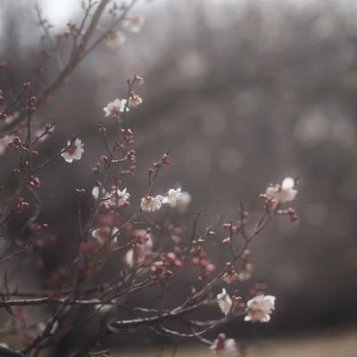 梅の香と春の光の作例写真