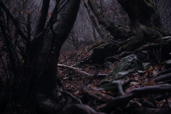 霧雨の奥多摩の森(御岳山)の作例写真