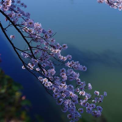 春のグラデーションの作例写真