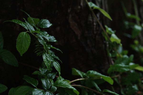 【雨にうたえば】流しきれない春