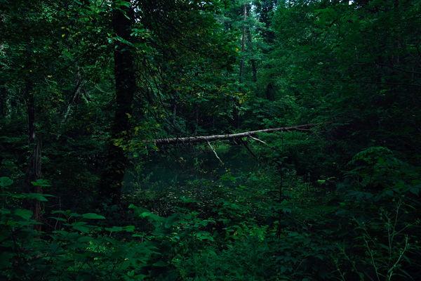 深緑の名もなき沼(福島県五色沼)の作例写真