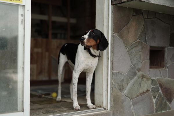 物憂げな犬の作例写真