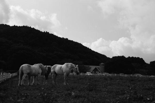 夏の牧場の作例写真