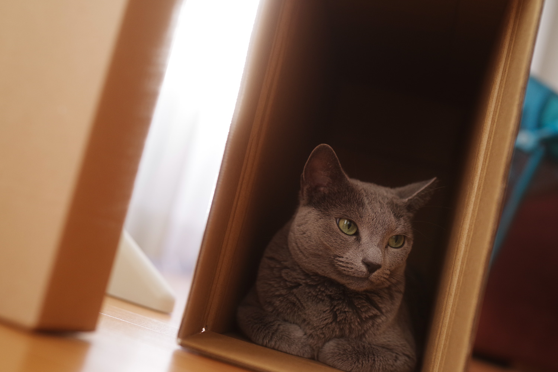 段ボールでくつろぐ猫の作例写真