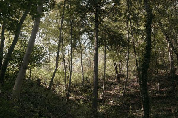 森に降り注ぐ光の作例写真