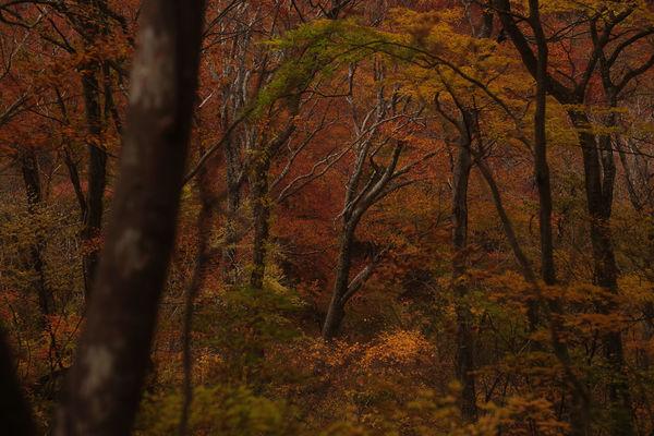 FA Limitedと★(スター)レンズは何が違うの?錦繍の谷川岳を撮り歩いてみた