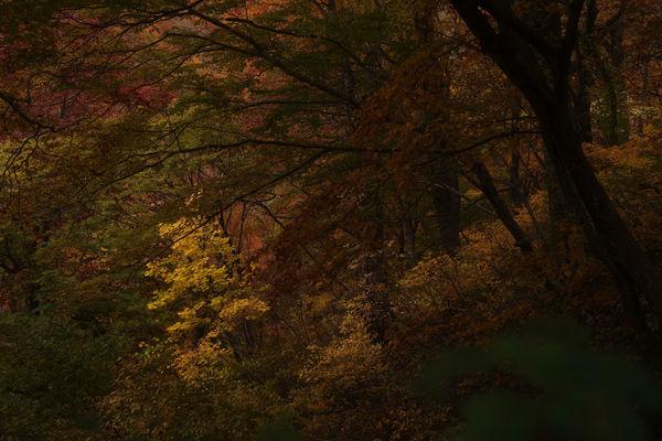 陰に浮かぶ黄葉の作例写真