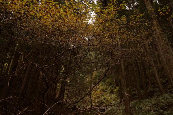 紅葉の森でカスタムイメージの組み立てを考える ─ 写真の色作り