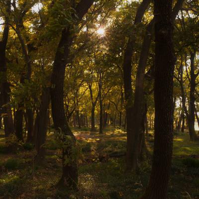 金色の光に包まれる森の作例写真
