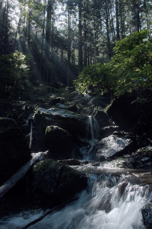 清冽な沢の流れ(埼玉県横瀬町)の作例写真