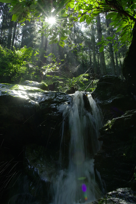 朝日を浴びる夏の渓流の作例写真