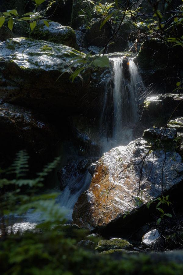 埼玉県横瀬町の朝の渓流の作例写真