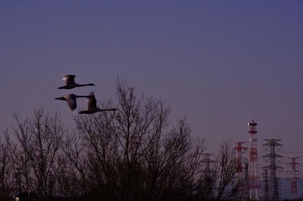鳥を撮りましょう ─ 身近なワイルドライフ