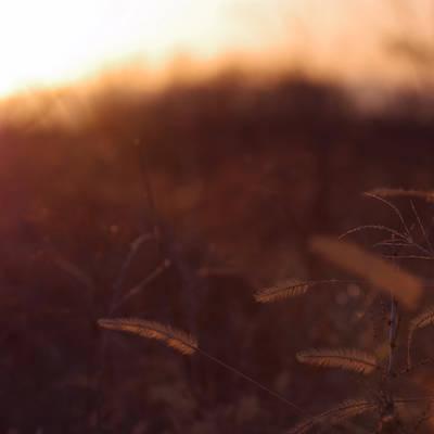 冬と春がとけあう夕暮れの作例写真