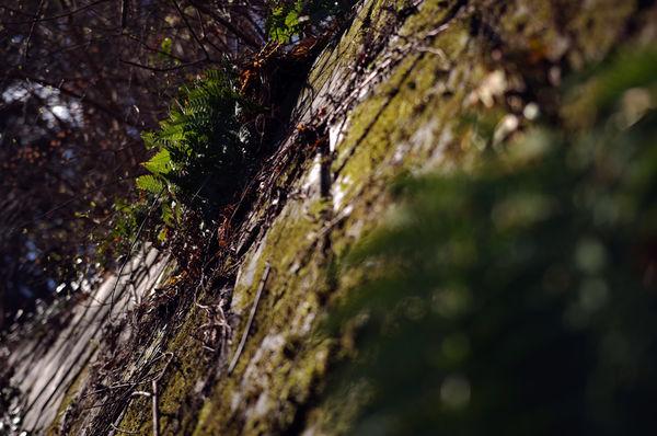 春の日差しを感じさせるシダの作例写真