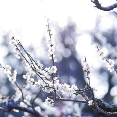 梅が咲く季節の作例写真