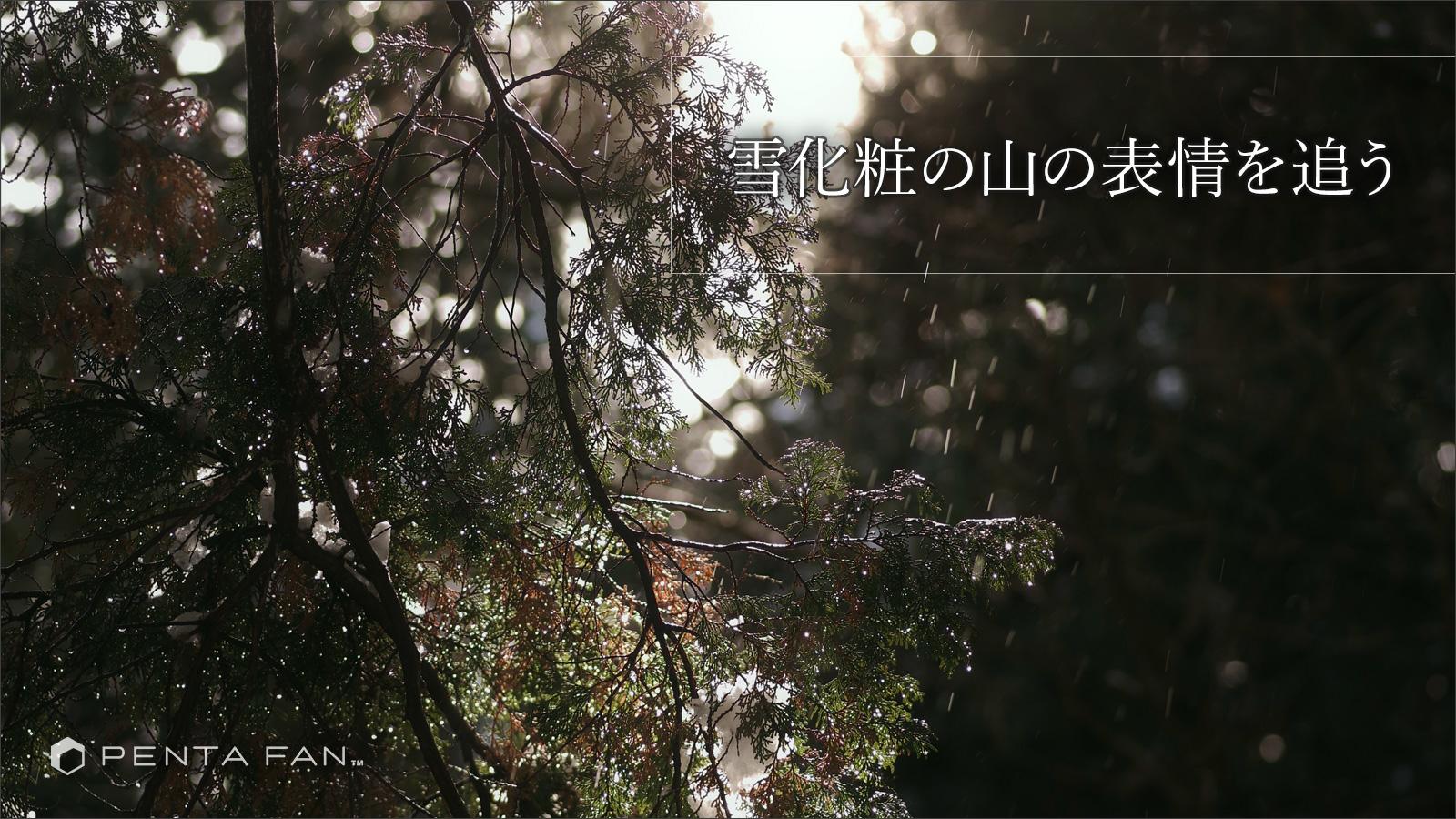 【雨にうたえば:番外編】雪に躍る森の風景 ─ 埼玉県武甲山(秩父市・横瀬町)