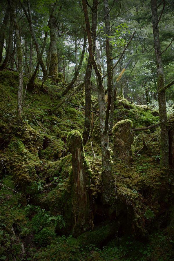 サルオガセがまとわりつく山中の雰囲気の作例写真