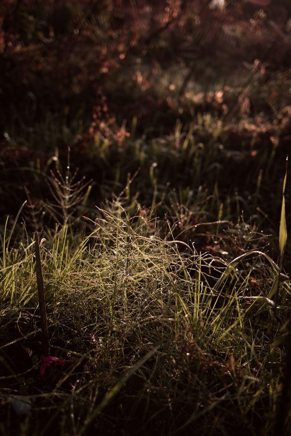 朝露と雑草の作例写真