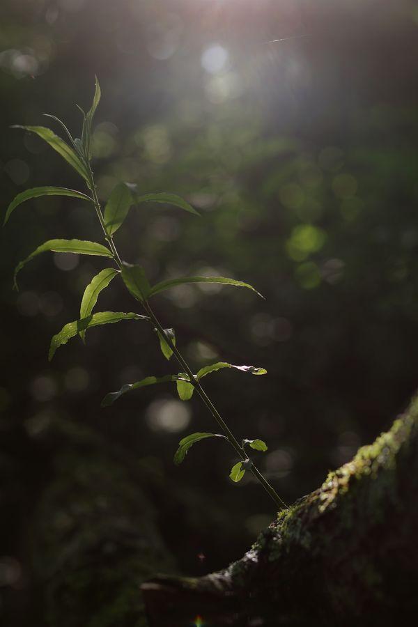 木漏れ日と枝の作例写真