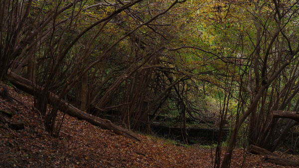 落ち葉と林に囲まれて(横瀬町)の作例写真