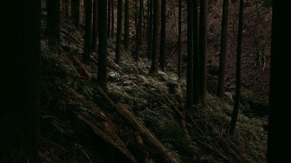 間伐と木々の作例写真