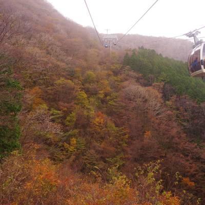 大涌谷へ向かうロープウェイと紅葉する斜面の作例写真