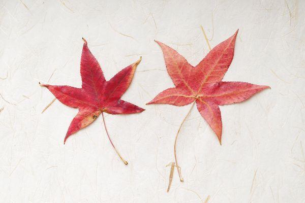 紅葉2枚と和紙の作例写真