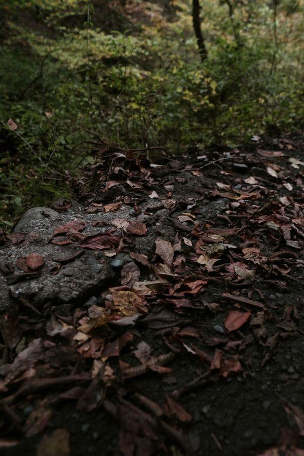 道端の枯れ葉の作例写真