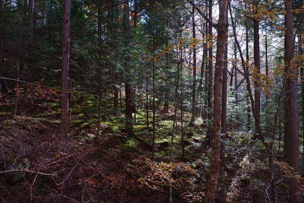 光が差し込む森の斜面の作例写真