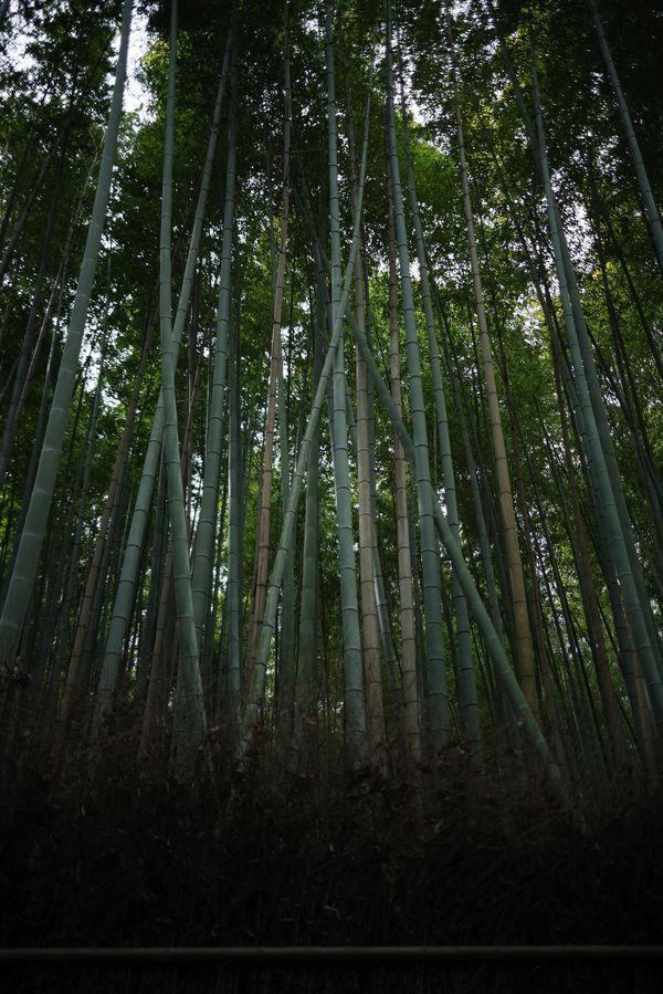 竹林の作例写真