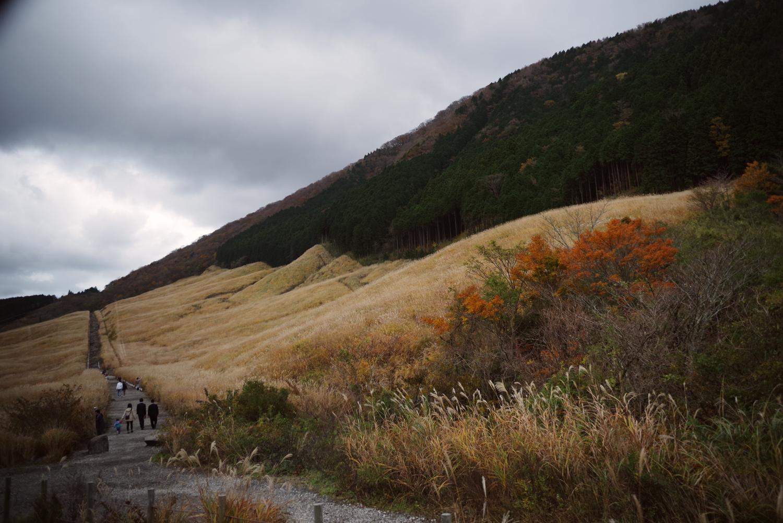 紅葉した仙石原すすき草原を歩く家族の作例写真